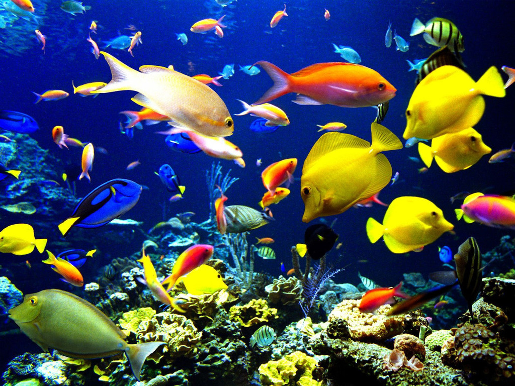 Colorful school of fish for School of fish